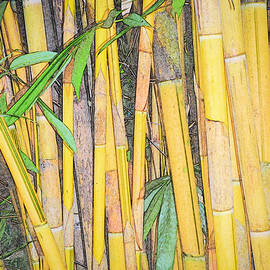 Patti Deters - Bamboo Sketch