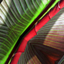 Tina M Wenger - Banana Leaf One Of Three