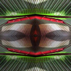 Tina M Wenger - Banana Leaf Red Middle