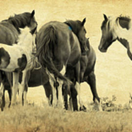 Athena Mckinzie - Band Of Horses
