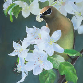 Marcus Moller - Bandit in the Blossoms