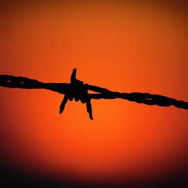 Reid Callaway - Barbed Wire Art Horse Art