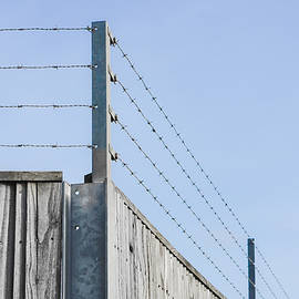 Barbed wire fence - Tom Gowanlock