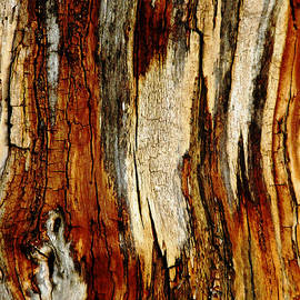 Debbie Oppermann - Bark Abstract