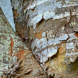 Lynda Lehmann - Bark Composition 9