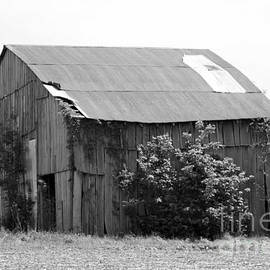 Dwight Cook - Barn in Kentucky no 58