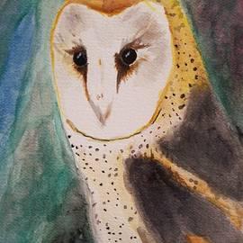 Amber Stanford - Barn Owl