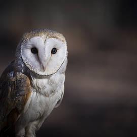 Andrea Silies - Barn Owl