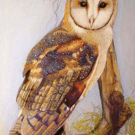 Lance Sheridan-Peel - Barn Owl