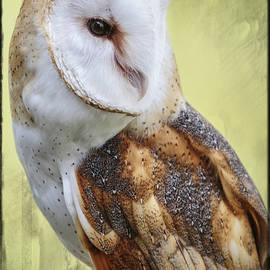 Wes and Dotty Weber - Barn Owl Portrait D8751