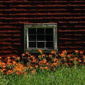 Bill Tomsa - Barnside Daylilies