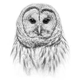 Jennie Marie Schell - Barred Owl Portrait Black and White