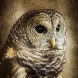 Melissa Bittinger - Barred Owl Portrait