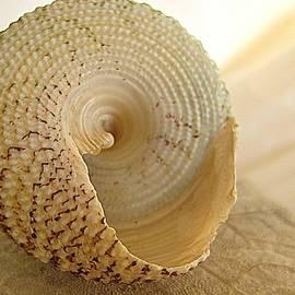 Shirley Sirois - Basking Seashell