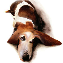 Basset Hound I - Lulu - David Breeding