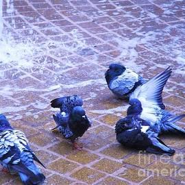 Marcus Dagan - Bath Time for Pigeons