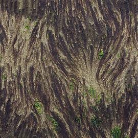 Morgan Wright - Beach Abstract 21