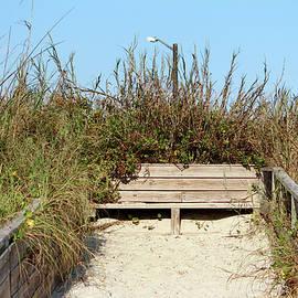 Cynthia Guinn - Beach Bench