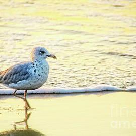 Debbie Nobile - Beach Bird