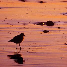 Jerry McElroy - Beach Bum