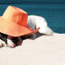 Shelley Neff - Beach Day for Bubba