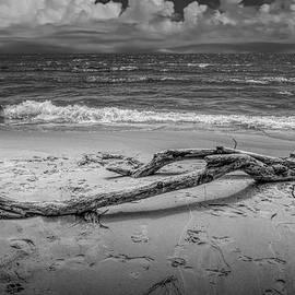 Randall Nyhof - Beach Driftwood in Black and White on Lake Michigan