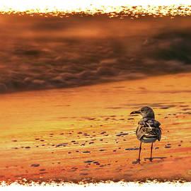 Marvin Spates - Beach Gull