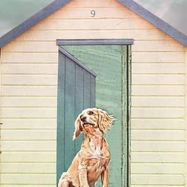 Terri Waters - Beach Hut Puppy