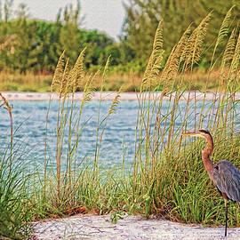 HH Photography of Florida - Beach Patrol