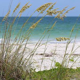 Carol Groenen - Beach through Sea Oats