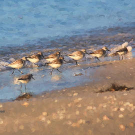 HH Photography of Florida - Beachcombers - Sandpipers on the Beach