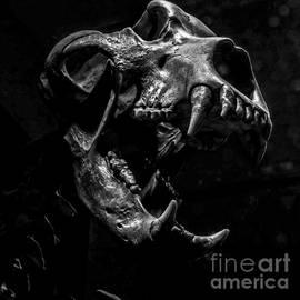 James Aiken - Bear Skull Square
