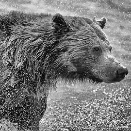 Max Waugh - Bear Spray