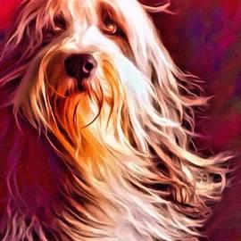 Scott Wallace - Bearded Collie Portrait 2