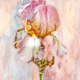 Mother Nature - Bearded Iris in Pastels