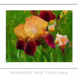 Mike Nellums - Bearded Iris Tuscana poster
