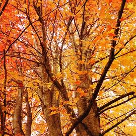 Lori Frisch - Beautiful Autumn
