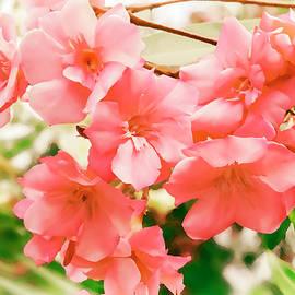 Galina Tolochko - Beautiful blooming pink oleander Bush in the sunshine..