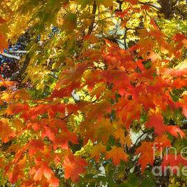 Reese Lewis - Beautiful Fall Colors