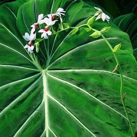 Sue Melvin - Beautiful Ivory Veins of a Philodendron
