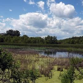 Sara  Raber - Beautiful Marsh View