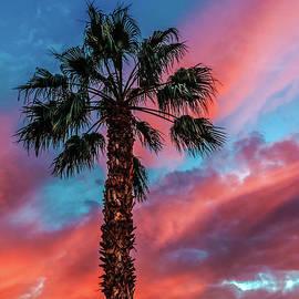 Robert Bales - Beautiful Palm Tree