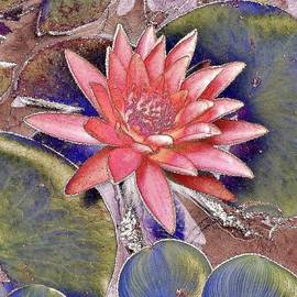 Kim Bemis - Beautiful Pink Lotus Abstract