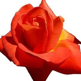 Tracey Harrington-Simpson - Beautiful Red Rose Photograph Vector