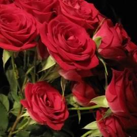Tara  Shalton - Beautiful Red Roses 3