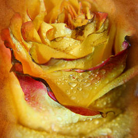 Lali Kacharava - Beautiful rose