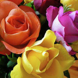 Helene Fallstrom - Beautiful shapes of roses