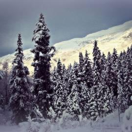 Toni Abdnour - Beautiful Wilderness