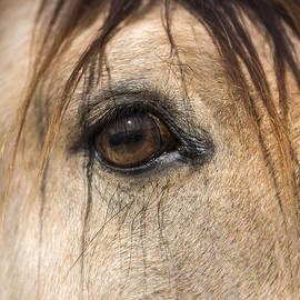 Lisa Moore - Beauty in the Eye