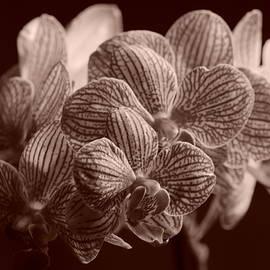Dimitry Papkov - Beauty up Close 4 Sepia